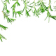 Rosemary sprigs as frame on white background with copy space - PhotoDune Item for Sale