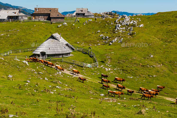 Velika Planina or Big Pasture Plateau in Slovenia. Traditional A - Stock Photo - Images