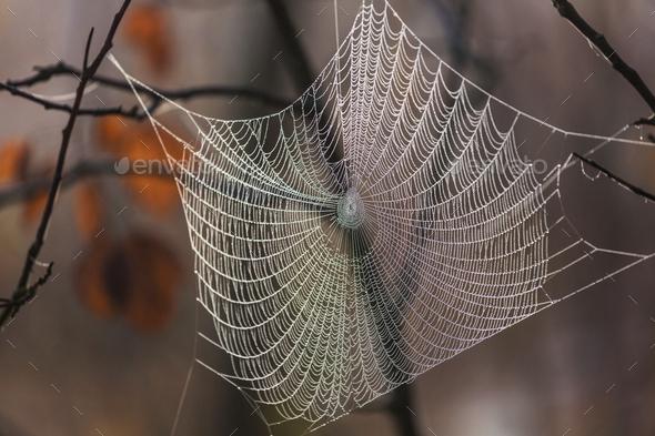 Spiderweb - Stock Photo - Images
