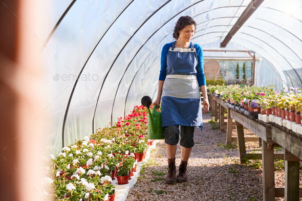 Mature Woman Working In Garden Center Watering Plants In Greenhouse With Watering Can - Stock Photo - Images
