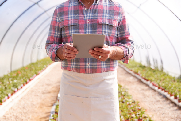 Close Up Of Mature Man Working In Garden Center Greenhouse With Digital Tablet Checking Plants - Stock Photo - Images