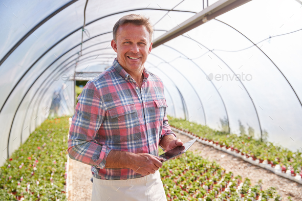 Portrait Of Mature Man Working In Garden Center Greenhouse With Digital Tablet And Checking Plants - Stock Photo - Images