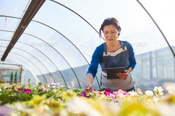 Mature Woman Working In Garden Center Greenhouse Holding Digital Tablet And Checking Plants - Stock Photo - Images