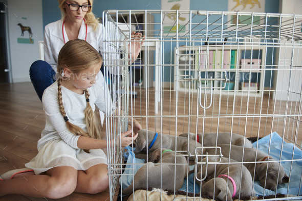 Doctor and girl next to the cage with puppies - Stock Photo - Images