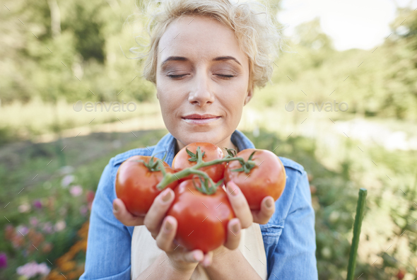 Fresh tomatoes right from the field - Stock Photo - Images