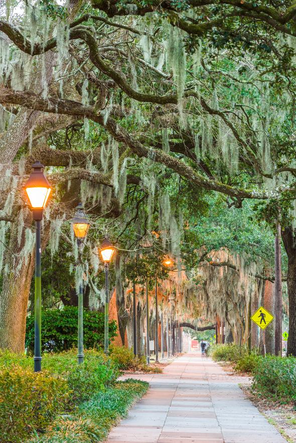 Savannah, Georgia, USA tree lined sidewalks - Stock Photo - Images
