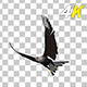 Caracara Hawk - 4K Flying Transition - 02 - VideoHive Item for Sale