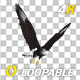 Caracara Hawk - 4K Flying Loop - Side Angle - VideoHive Item for Sale