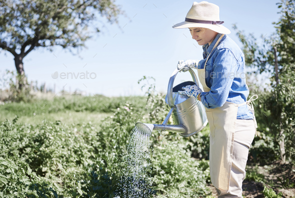 Woman watering crop in fields - Stock Photo - Images