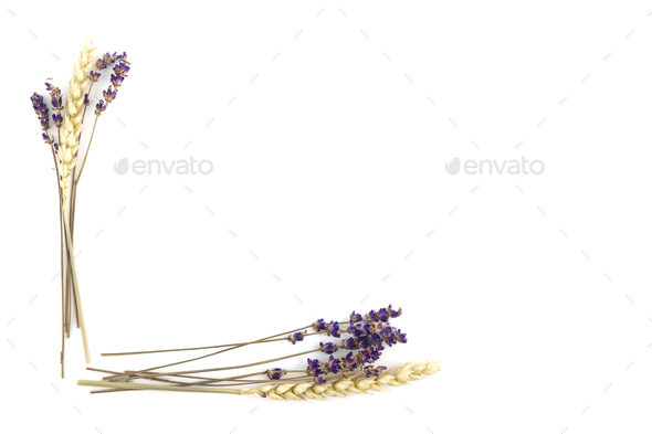 Violet Lavender Flowers and Rye Frame Background - Stock Photo - Images