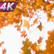 Whirling Under The Autumn Trees - VideoHive Item for Sale