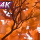 Bright Autumn Leaf Fall - VideoHive Item for Sale