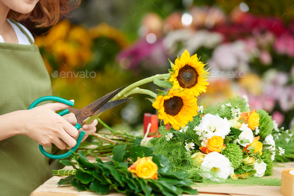 Cutting sunflowers - Stock Photo - Images