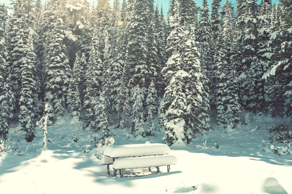 Winter park - Stock Photo - Images