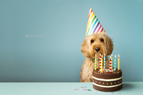 Astonishing Dog With Birthday Cake Stock Photo By Ruthblack Photodune Personalised Birthday Cards Paralily Jamesorg