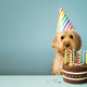 Dog with birthday cake - PhotoDune Item for Sale