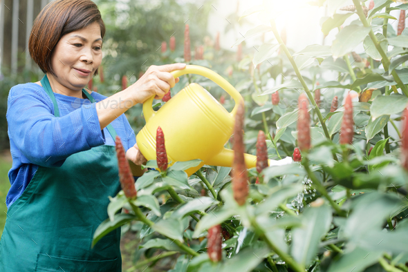Woman watering flowers - Stock Photo - Images