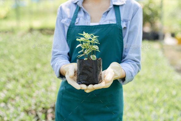 Care for plants - Stock Photo - Images