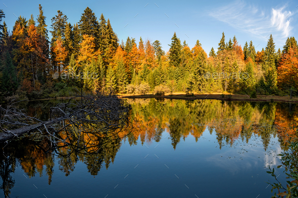 Forest lake in autumn colorful foliage - Stock Photo - Images