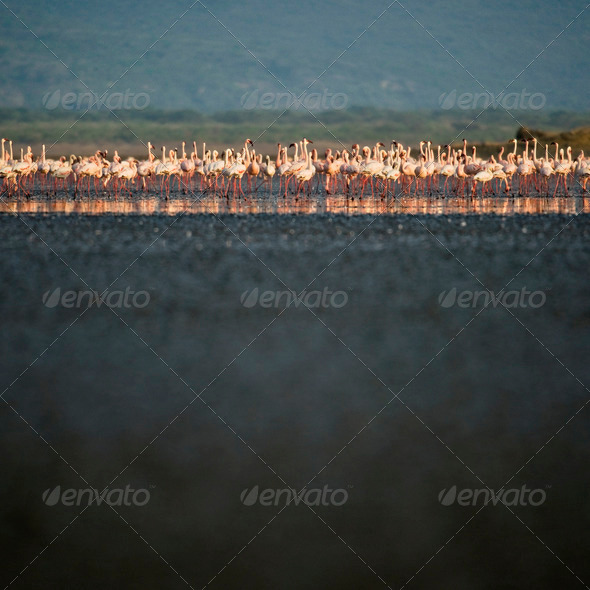 Flock of flamingoes by river, Tanzania, Africa - Stock Photo - Images