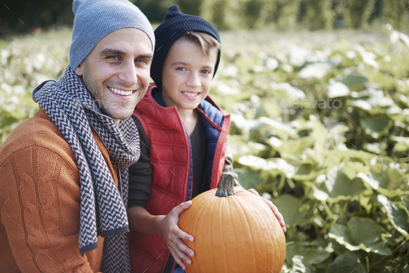 Father and son in the pumpkin field - Stock Photo - Images