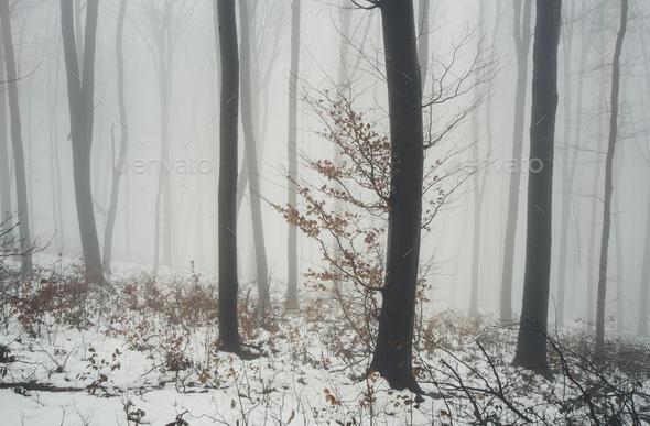 tree in fog in winter fantasy landscape