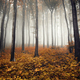 autumn colors and trees in fog in forest landscape - PhotoDune Item for Sale