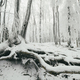 forest with frozen trees covered with snow in winter woods - PhotoDune Item for Sale