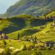 Vineyards view in Santa Maddalena Bolzano. Trentino Alto Adige S - PhotoDune Item for Sale