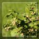 Flowering - Focus Change - VideoHive Item for Sale