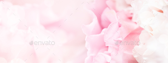 Soft Focus Banner with Pink Flowers. - Stock Photo - Images