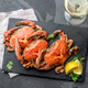 Cooked crabs on black plate served with white wine - PhotoDune Item for Sale