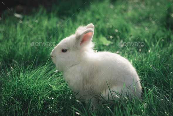 White Bunny in the grass - Stock Photo - Images