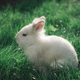 White Bunny in the grass - PhotoDune Item for Sale