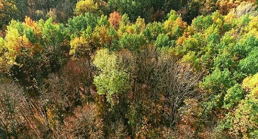 Nature_Aerial
