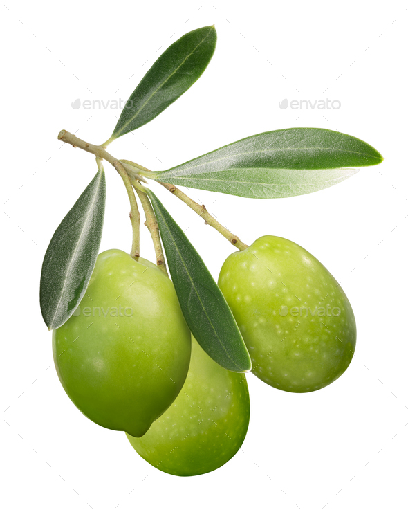 Green olives on branch w leaves, paths - Stock Photo - Images