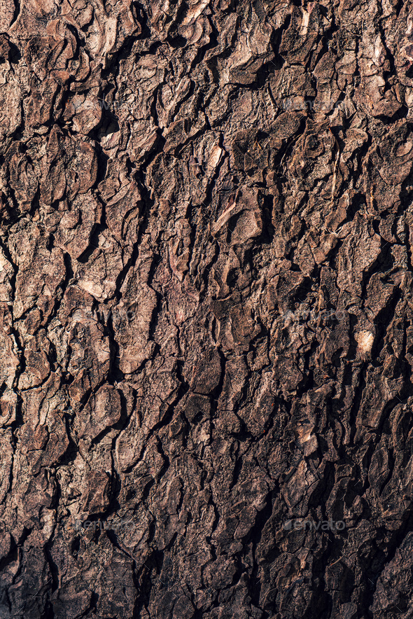 Tree bark rough texture as natural background - Stock Photo - Images