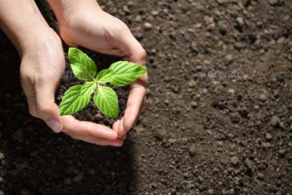 Young plant and tree - Stock Photo - Images
