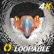 Caracara Hawk - 4K Flying Loop - Front View - VideoHive Item for Sale
