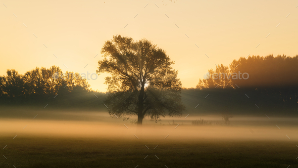 Big tree on meadow - Stock Photo - Images