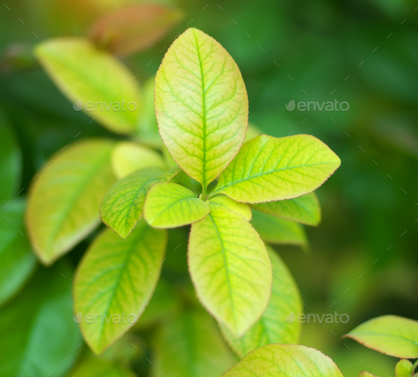 Spring leaf nature. - Stock Photo - Images