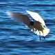 Sea Shore Gulls - VideoHive Item for Sale