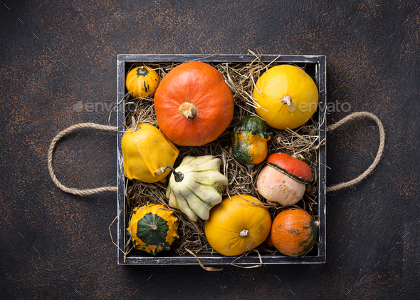 Assortment of decorative colorful pumpkins - Stock Photo - Images