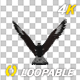 Caracara Hawk - 4K Flying Loop - Back View - VideoHive Item for Sale