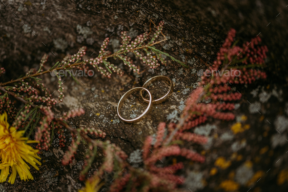 Wedding rings on a stone - Stock Photo - Images