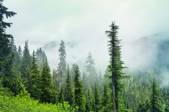 Fog in the forest - Stock Photo - Images