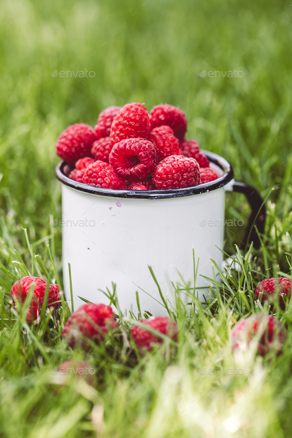 Raspberries in a cup on grass. Fall mood. Summer time. Copy space - Stock Photo - Images