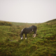 Horse in Brecon Beacons National Park, UK - PhotoDune Item for Sale