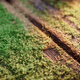 Wooden table with moss in sunlight close-up. Natural texture. - PhotoDune Item for Sale