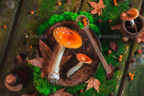 Red toadstool mushrooms on a table with moss and leaves. Potion ingredients header. Autumn flat lay - Stock Photo - Images